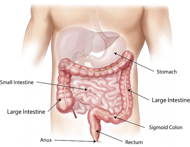 Colon Cleanse and Benefits
